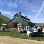 wine tasting events activities things to do in wine country santa ynez santa barbara vineyard